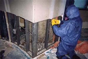 mold remediation phoenix