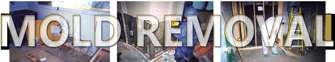 Mold Remediation & Removal Phoenix Arizona